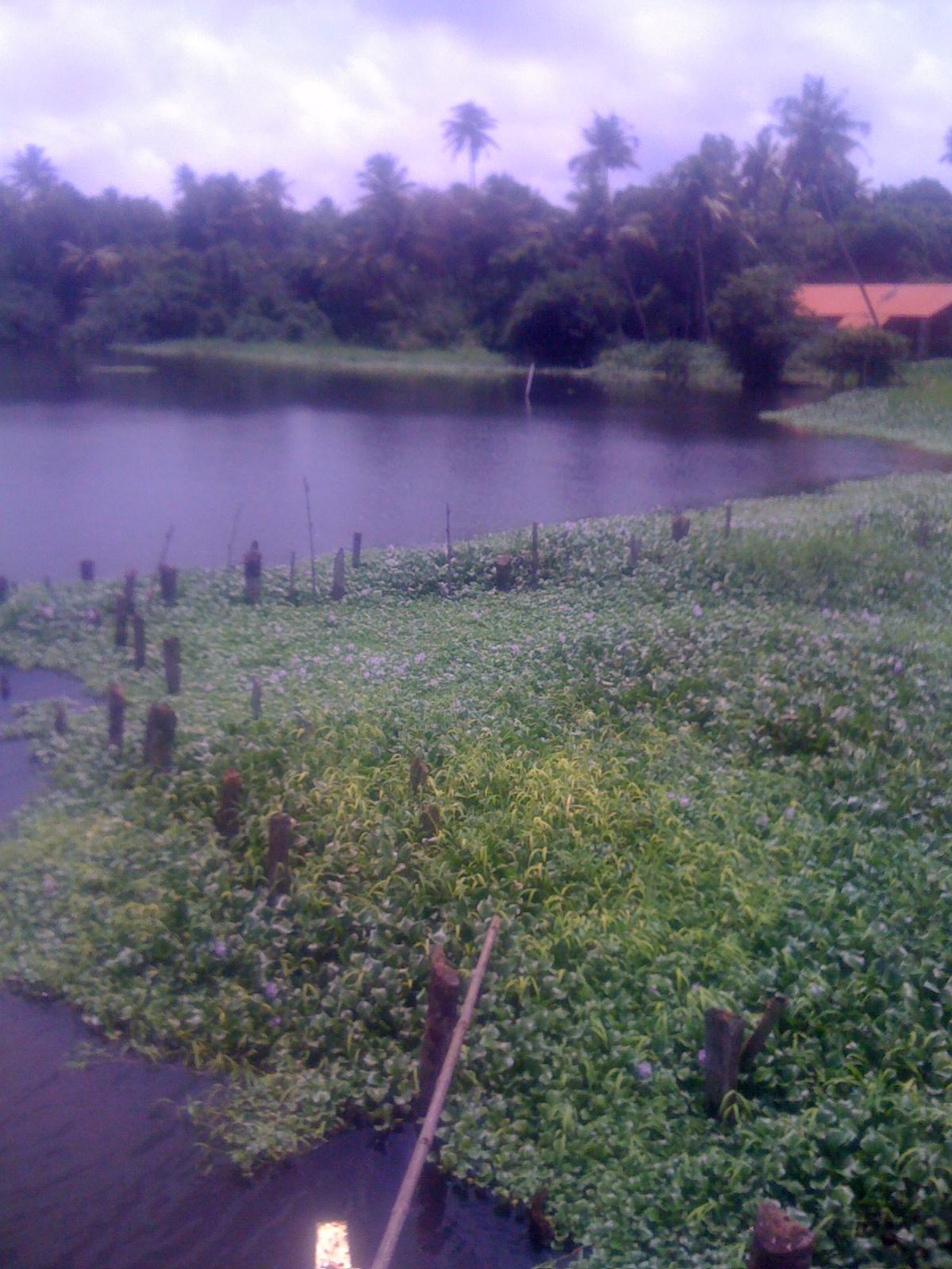Appunti veloci dall'India – Kerala