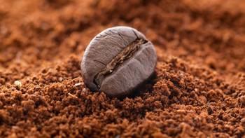 """""""Terra Nera"""": il caffè più costoso al mondo"""