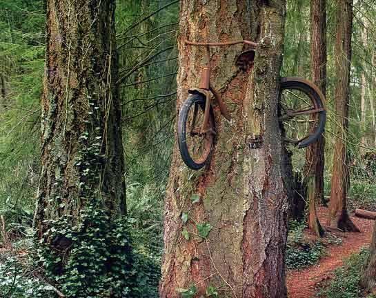 Quando la natura crea l'arte