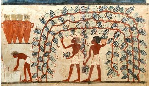 """Prosit! In arrivo mostra archeologica """"Il vino nell'Antico Egitto"""""""