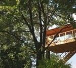 Casa-sugli-alberi