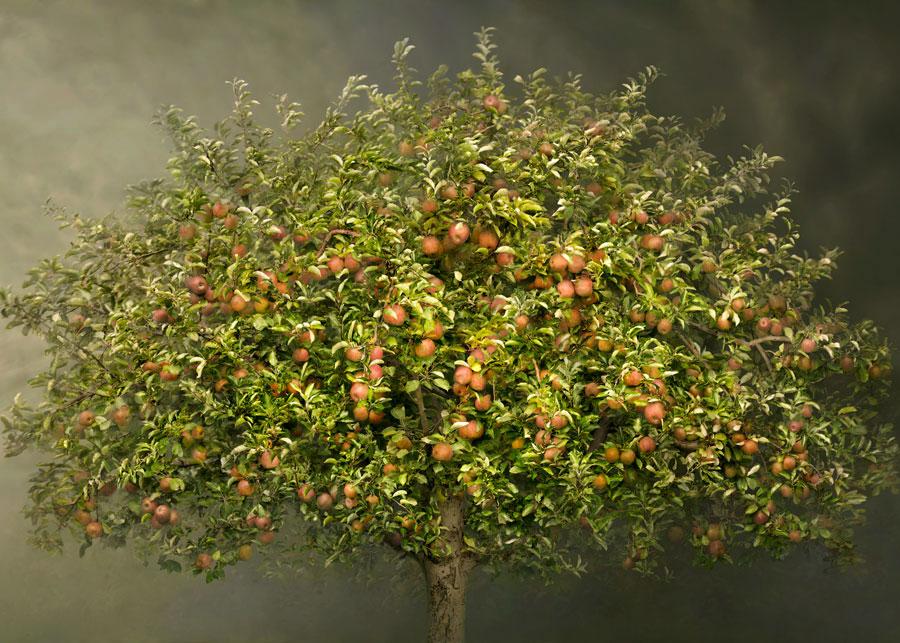 Trees. Le meraviglie della natura di Irene Kung