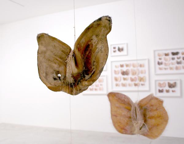 Joy Machine Chiara Lecca Orecchie Maiale Animali Arte Contemporanea Locarno Fondazione Ghisla