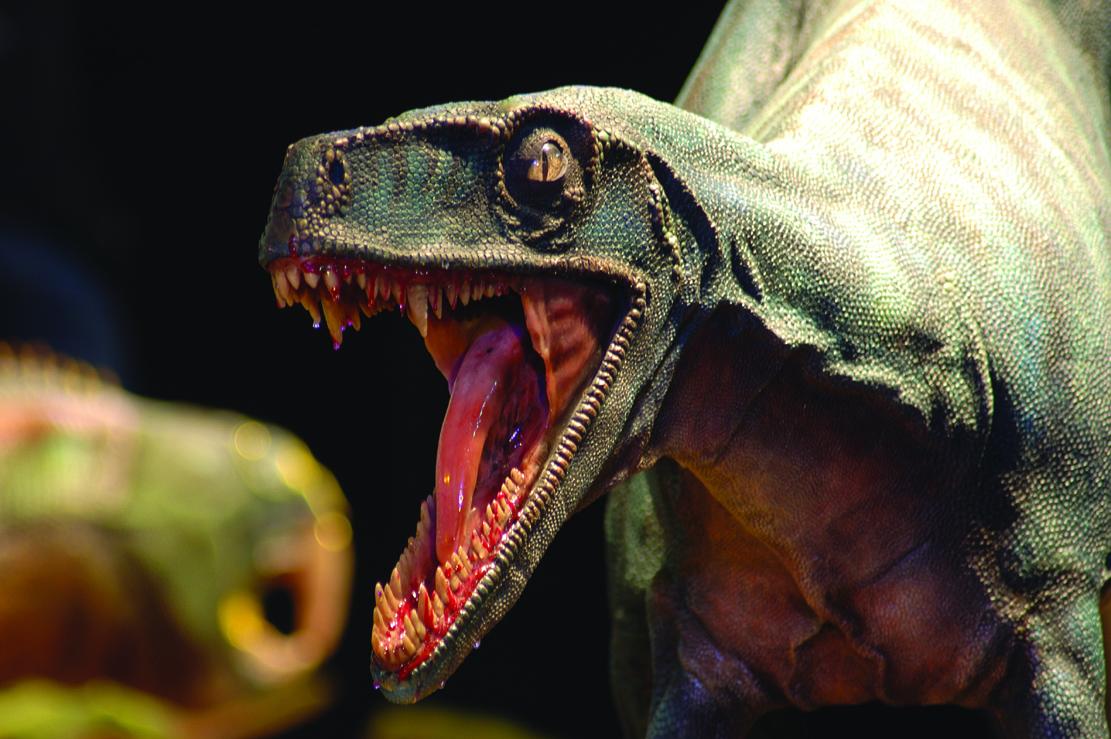 Herrerasaurus ischigualastensis, particolare