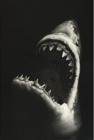 "Un iperrealistico ""Squalo Bianco"" di Robert Longo in asta da Lempertz"