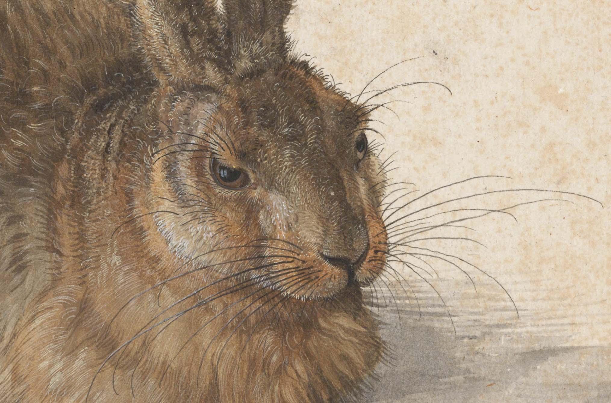 Albrecht Dürer, Hare, 1502