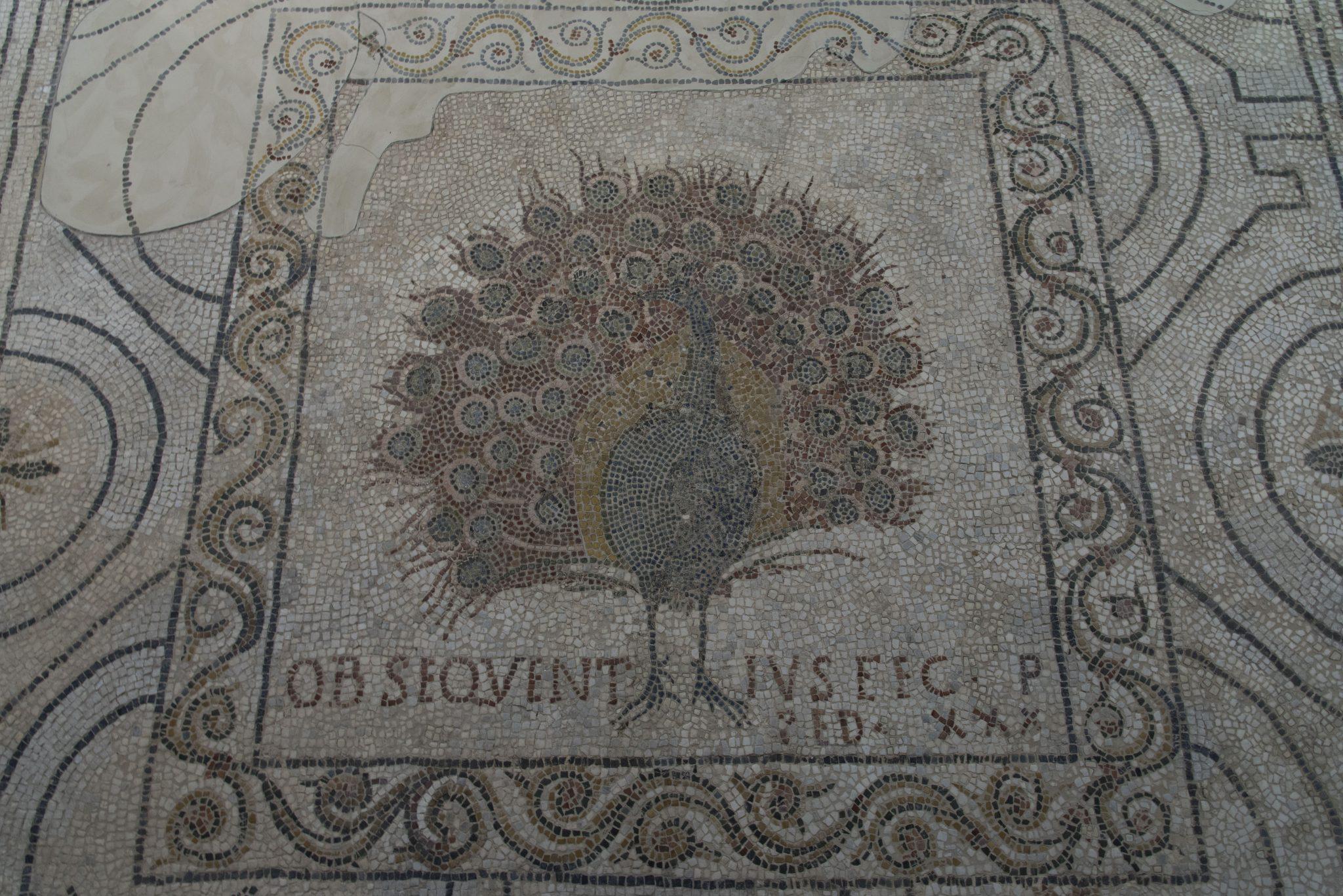 Mosaico Pavone dopo il restauro