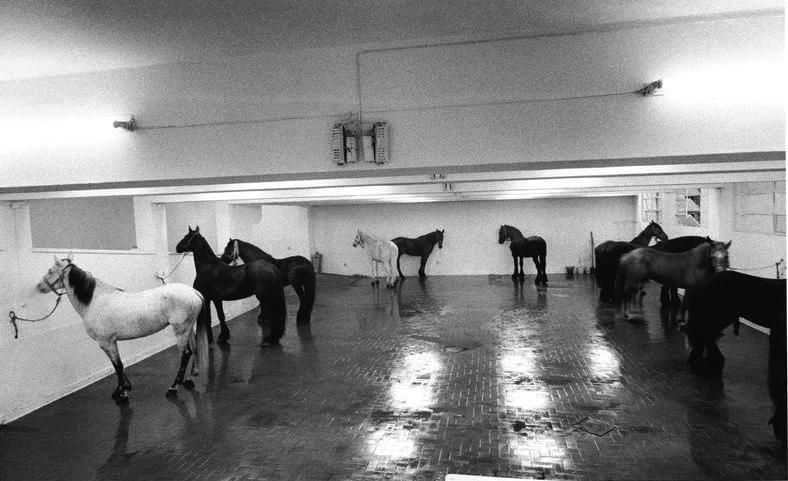 Jannis Kounellis, Cavalli, Galleria L'Attico, Roma, 1969