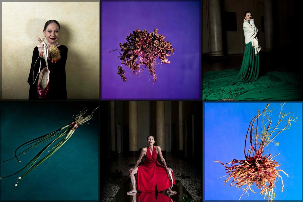 Danza e natura in mostra allo Studio Messina di Milano