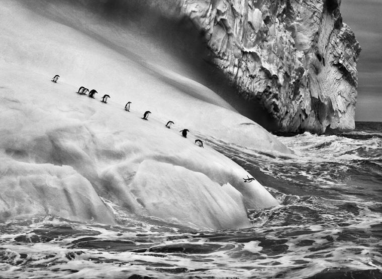 Isole South Sandwich, 2009 © Sebastião Salgado/Amazonas Images/Contrasto