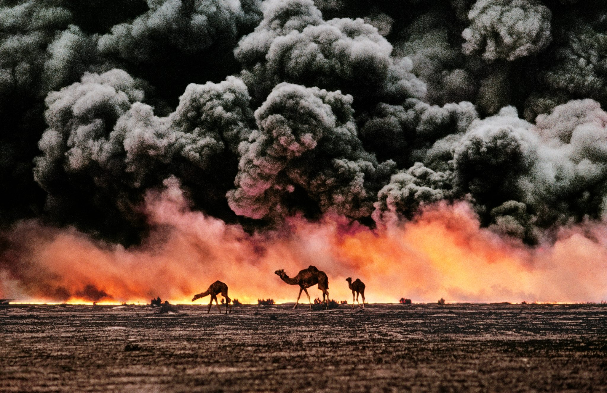 Steve McCurry, Al Ahmadi, Kuwait, 1991, © Steve McCurry