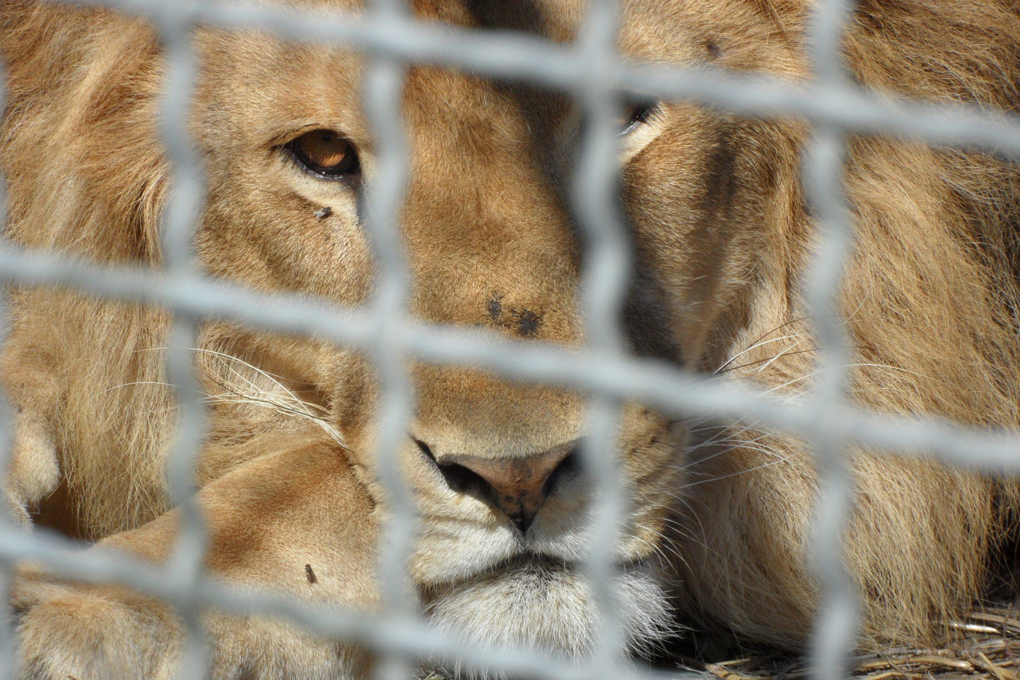 Italia verso lo stop agli animali nei circhi