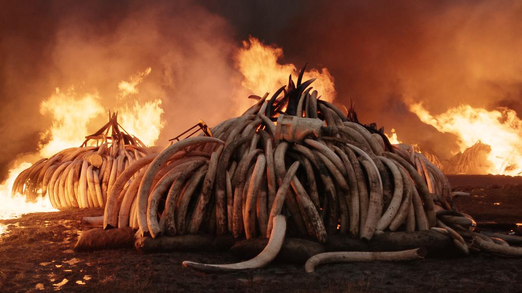 Antropocene, in streaming il documentario che esplora l'impatto dell'uomo sul pianeta