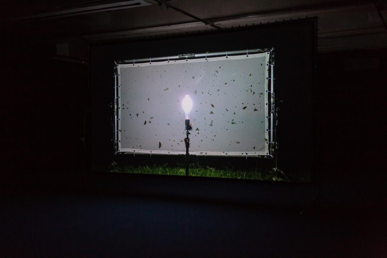 Installazione, Henrik Håkansson, Blinded by the Light