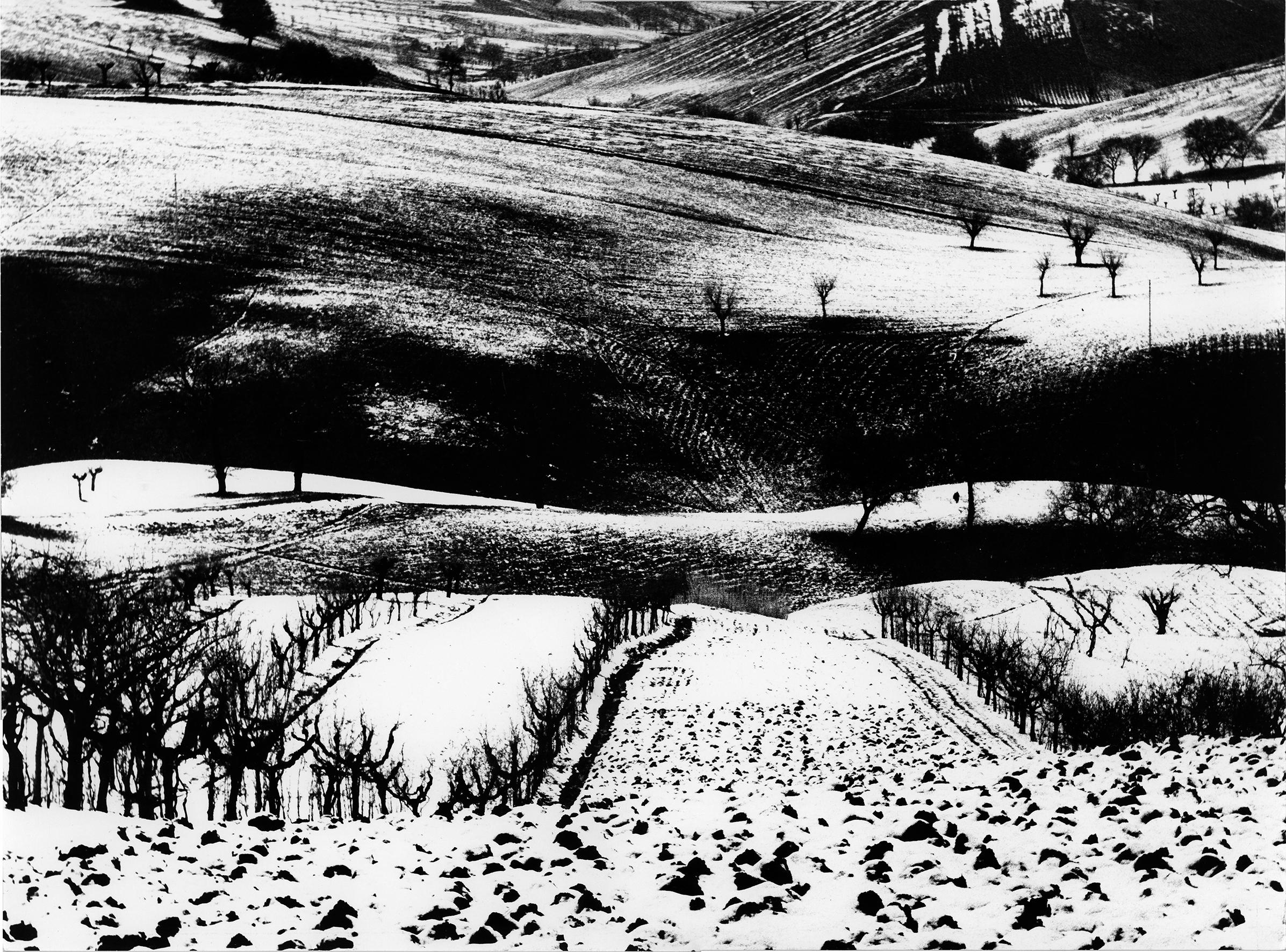 Il fotografo che inseguiva i fantasmi. Tra fiaba e astrazione, i paesaggi agresti di Mario Giacomelli a Milano