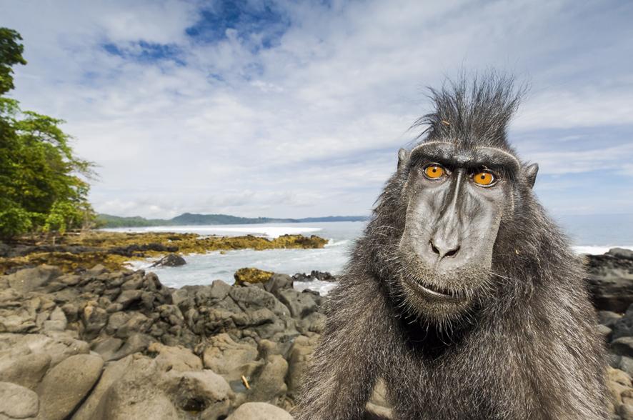 Ritratti dal mondo animale. Al Forte di Bard, i reportages di Stefano Unterthiner per il National Geographic Magazine