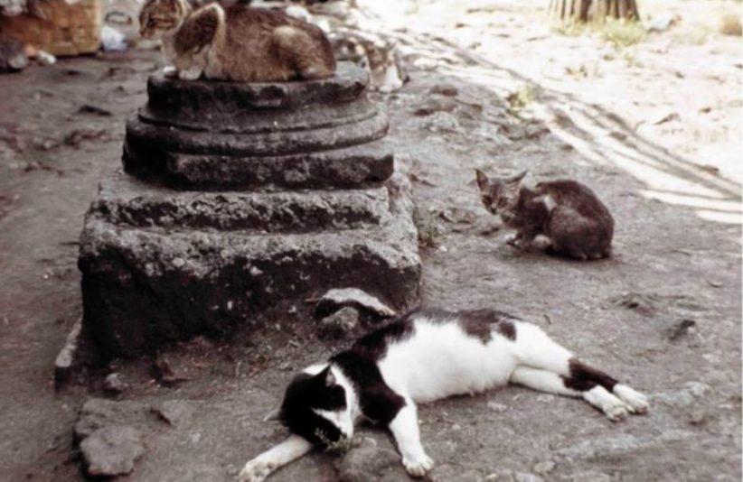 Simone Forti, Largo Argentina (AKA Rome Cats), 1968/2012