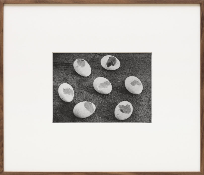 Alessandra Spranzi, Gusci di uova mangiate da una faina (L'insieme è nero), 2016, stampa ai sali d'argento/gelatin silver print, cm.18x25 (incorniciata/framed cm.44x52), ed.3+2pda. ph.C.Favero - Courtesy P420