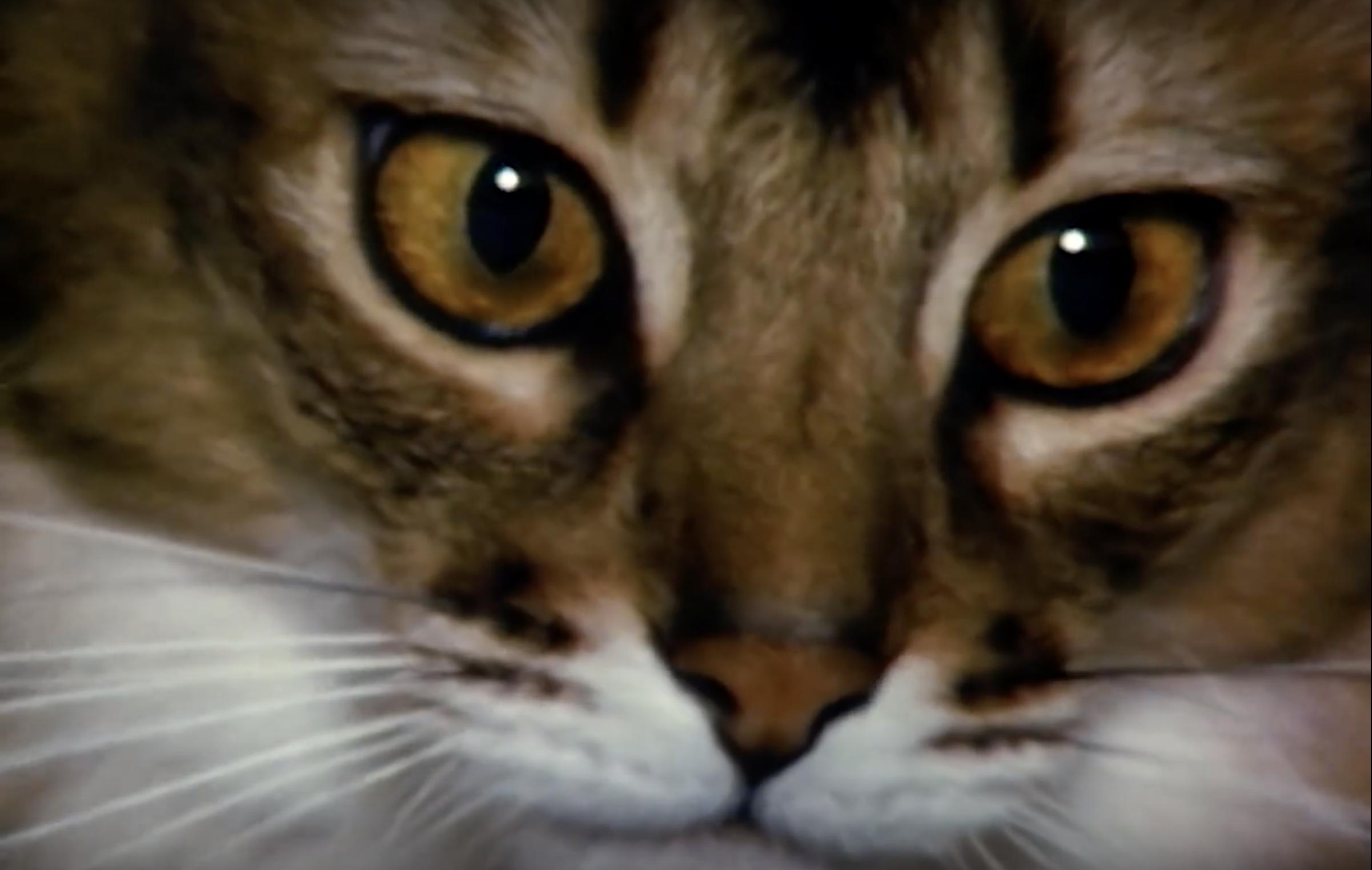 Metropolitan Cats. Tutti i gatti del Met di New York in un breve (splendido) film