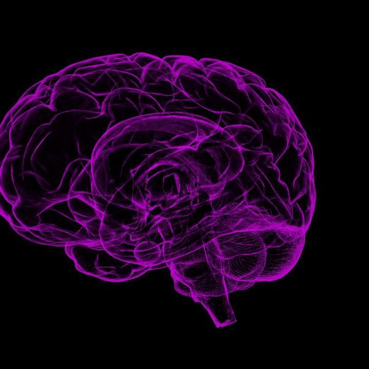 Frammenti vitrei scoperti a Ercolano: è un cervello umano di duemila anni fa. Dall'archeologia grandi sviluppi scientifici