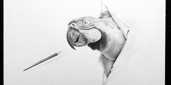 Massimiliano Galliani, Attraverso, disegno a matita