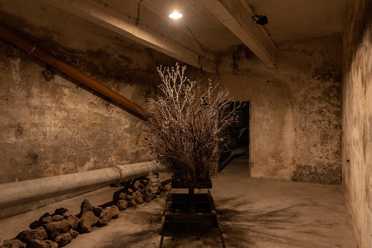 La sacralità arborea di Diana Lelonek: la mostra a Roma