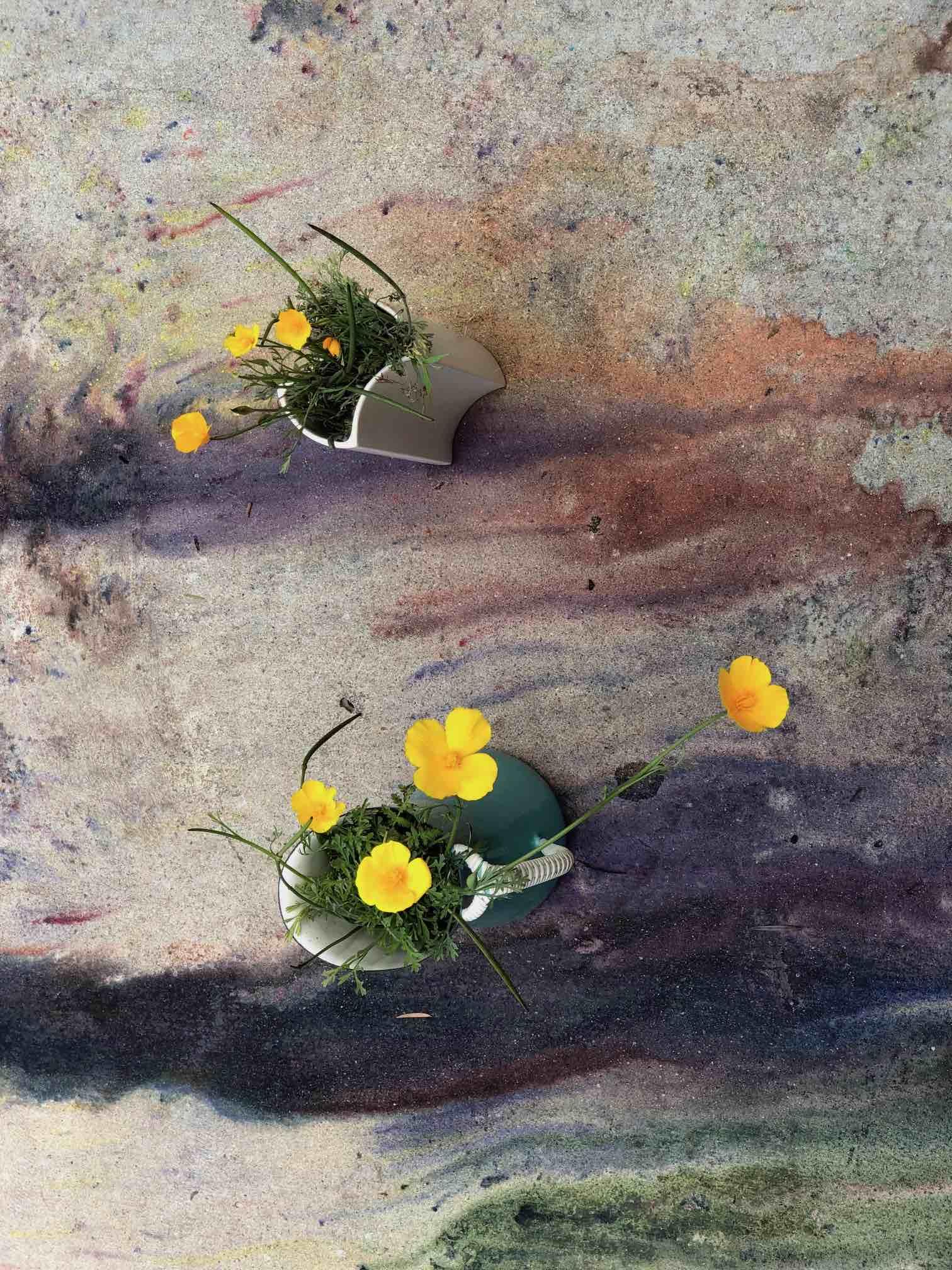 #ivegotflowersforyou. La Galleria Franco Noero tra mostre virtuali e progetti social