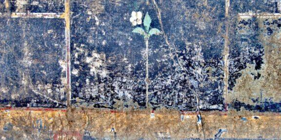 Un fiore bianco e un graffito con scritto Mummia ritrovati a Pompei