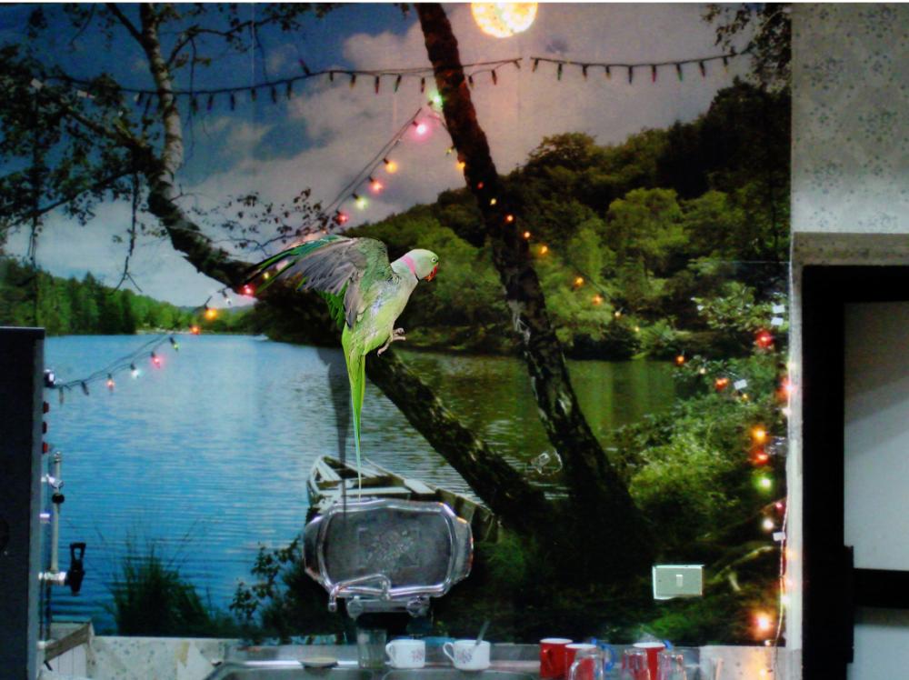 ROSA SANTOS Maha Maamoun Untitled (Parrot) 2015 Stampa a getto d'inchiostro su dibond 59 x 80 cm Ed. 1/6 + 2 AP Courtesy dell'artista e Rosa Santos, Valencia