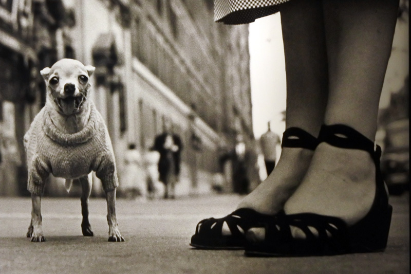 New York 1948, Elliott Erwitt