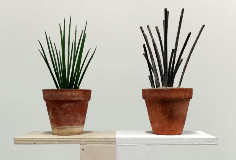 Meccaniche delle meraviglie Andrea Francolino, A-biotic, 2017