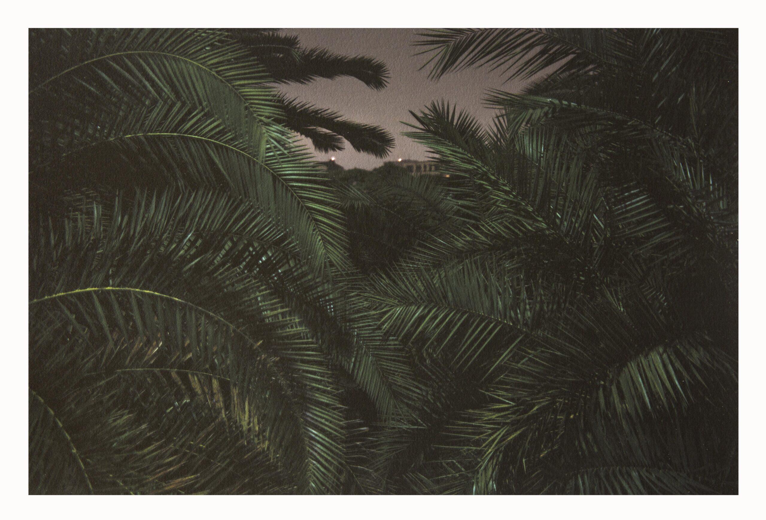 Incontri e perlustrazioni crepuscolari, sguardi e foreste tropicali. Il Brasile di Silvia Mariotti condensate in un viaggio editoriale