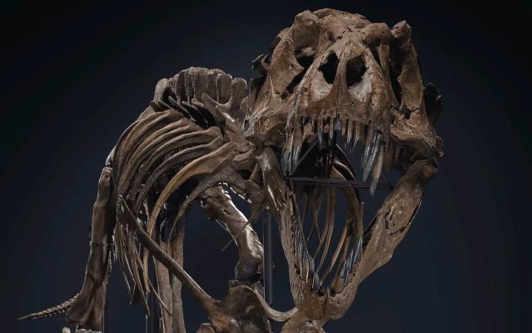 """Record! Stan incoronato Re da Christie's: il T Rex da 31 milioni domina l'asta """"20th Century"""""""