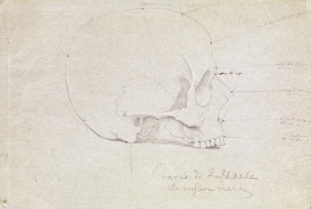 Tommaso Minardi, Cranio di Raffaello, 1833, matita su carta, collezione privata