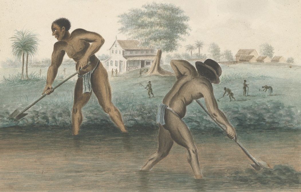 Slavery, all'origine dello schiavismo: il Rijksmuseum riflette sul passato dell'Olanda