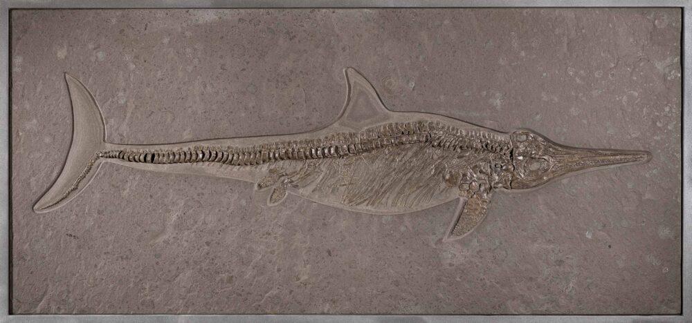 Eccezionale esemplare di ittiosauro