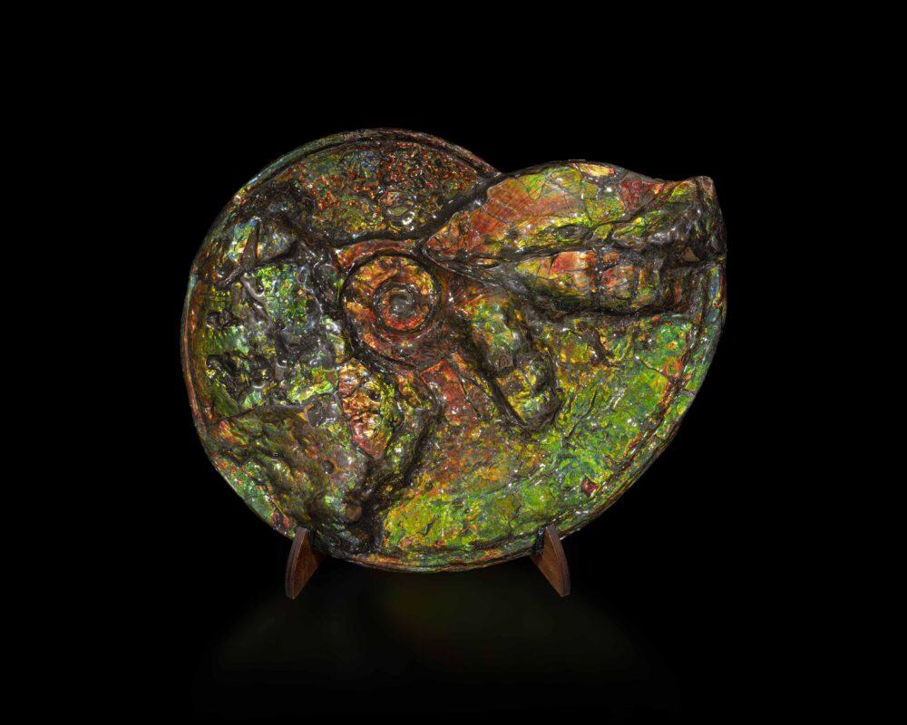 Rara ammonite iridescente