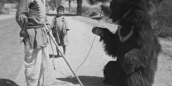 Montreur d'ours. Environs d'Agrâ (Uttar Pradesh, Inde). 1961. © Hélène Roger-Viollet / Roger-Viollet