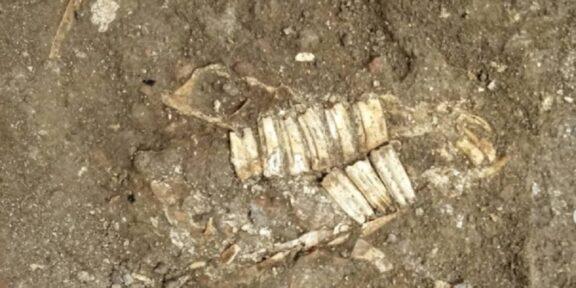 resti cavalli Parco Archeologico Colosseo