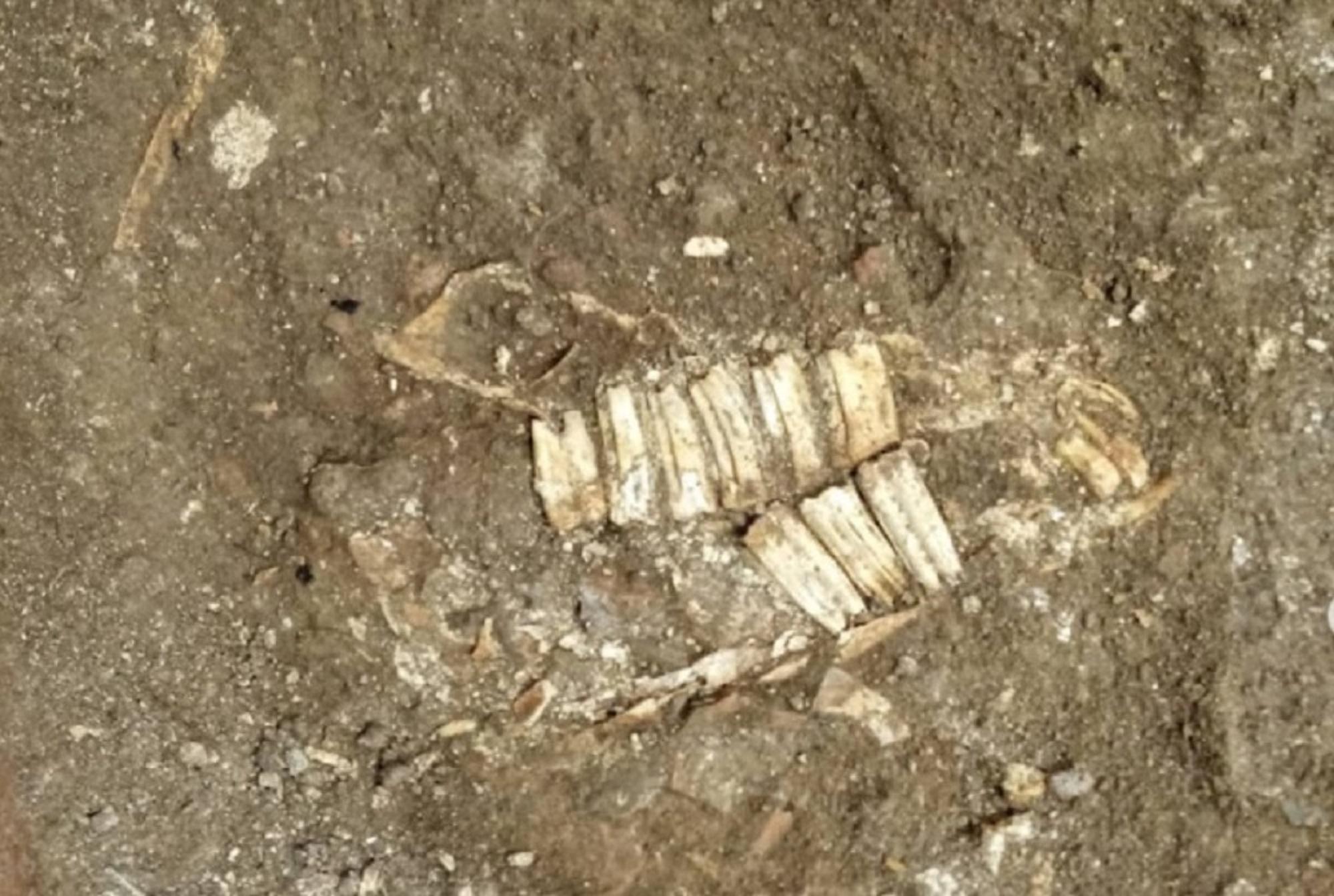 Colosseo, ritrovati resti di alcuni cavalli nel parco archeologico