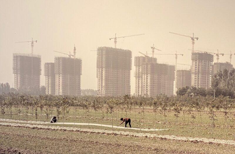 Contadine al lavoro nei pressi di Zhongmu, 2019