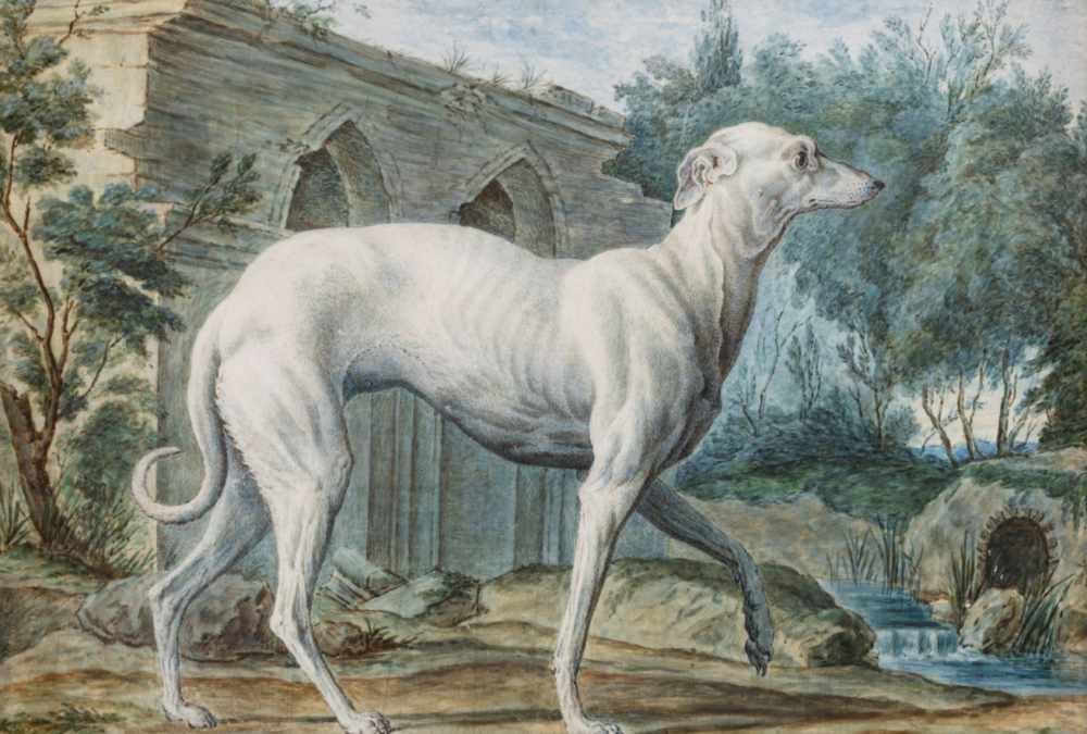 NICOLAS MARECHAL, (Parigi, 1753 - 1803), Levriero, Matita e acquerello su pergamena, cm 21X31,5. Stima € 10.000 - 15.000