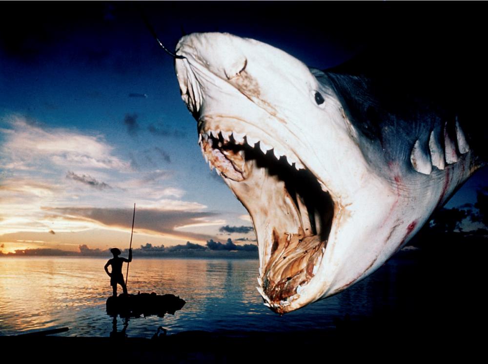 17.Folco Quilici_Isole Tuamotu_Rangiroa_ Cattura di squalo tigre_ 1961_Folco Quilici © Archivi Alinari