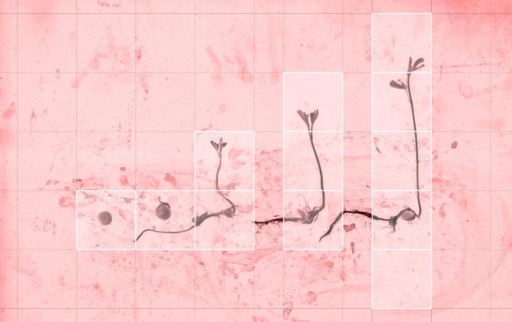 Michele Guido, Conseguente evoluzione, stampa lambda e serigrafia su acetato