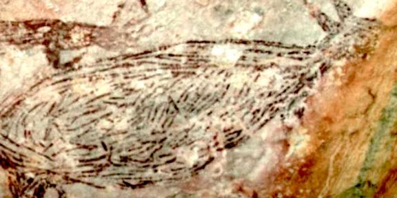 Una delle pitture rupestri scoperte in Australia