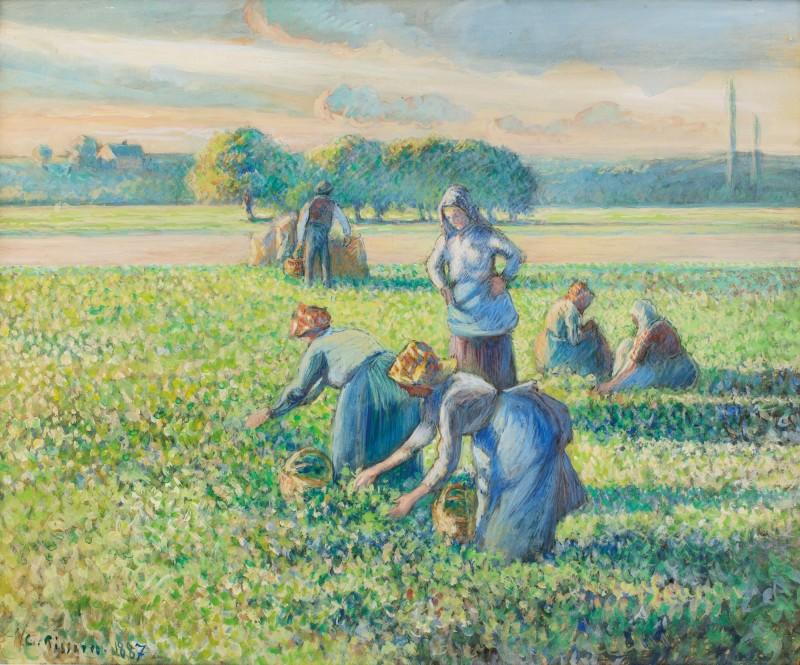 Camille Pissarro, La Récolte des pois. Estimate: 1,200,000 - 1,800,000 EUR