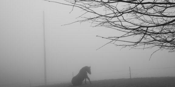 A horse. Switzerland, 2020