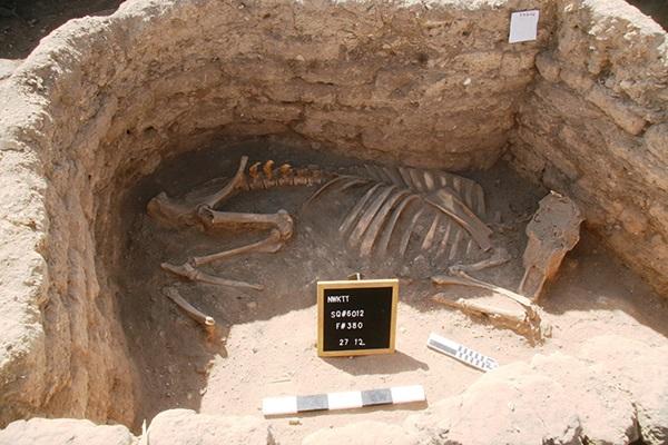 Egitto, sepolture città d'oro
