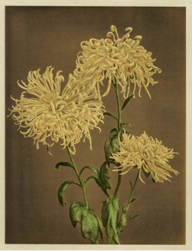 Ogawa Kazumasa, Iris, 1896 Copyright © MUSEC / Fondazione Ada Ceschin e Rosanna Pilone