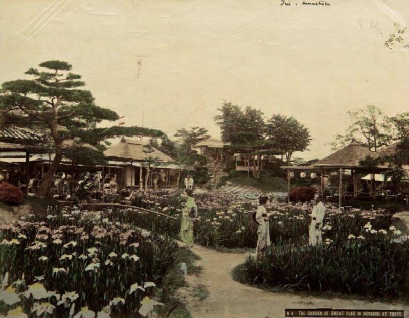 Tadashi Fukasawa, The garden of sweat flag in Horikiri at Tokyo, 1901 – 1908 Copyright © MUSEC / Fondazione Ada Ceschin e Rosanna Pilone